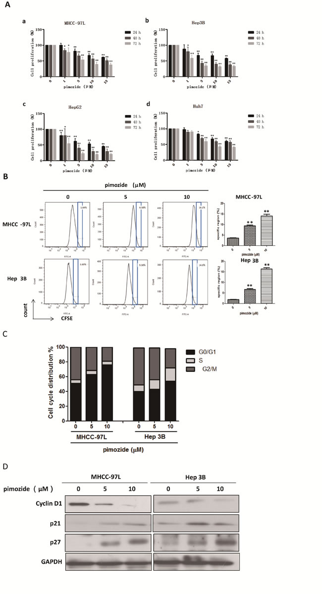 The neuroleptic drug pimozide inhibits HCC cell proliferation in dose- and time-dependent manners by inducing G0/G1 phase cell cycle arrest.