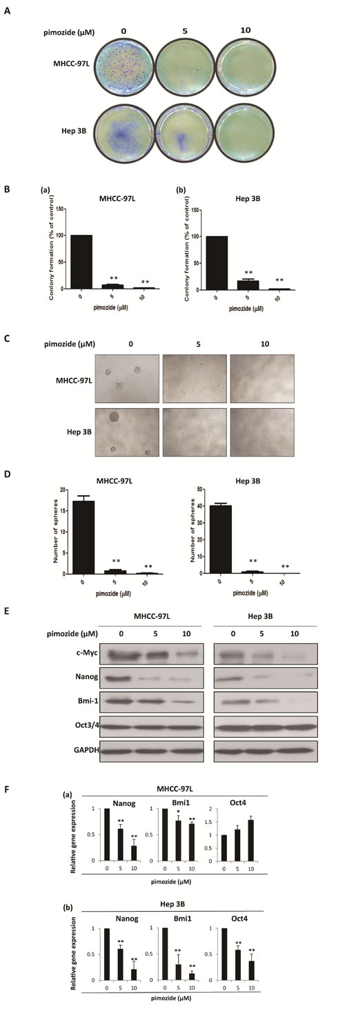 Pimozide inhibits the self-renewal capacity of HCC cells.