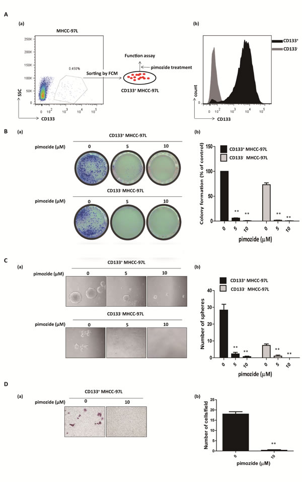 Pimozide inhibits the self-renewal and migration capacities of CD133-positive HCC cells.