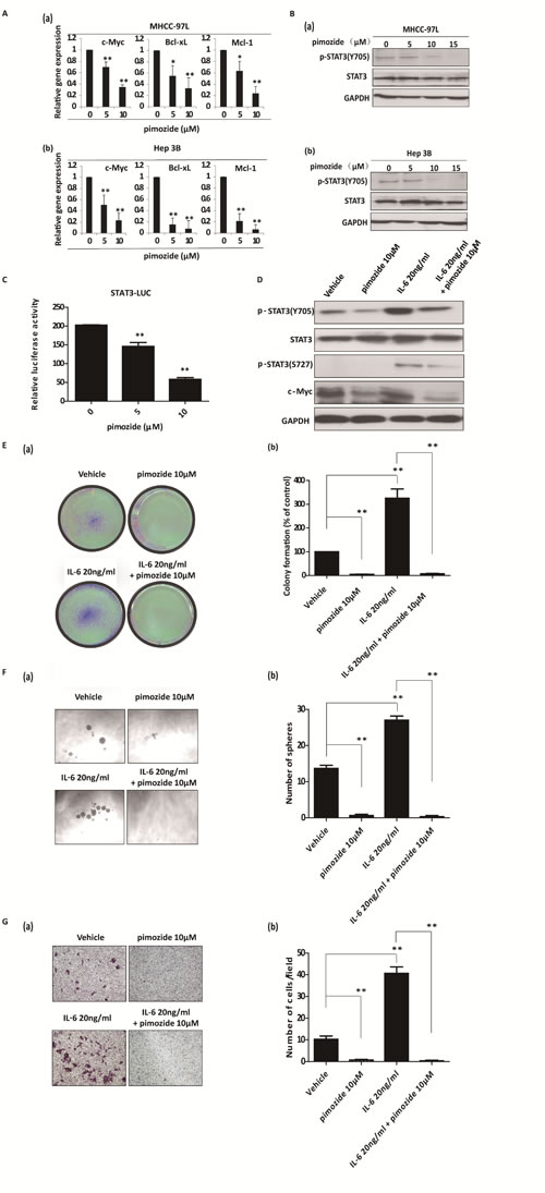 Pimozide suppresses the activity of STAT3 signaling and reverses cancer stem-like cell phenotypes induced by IL-6 addition in HCC cells.
