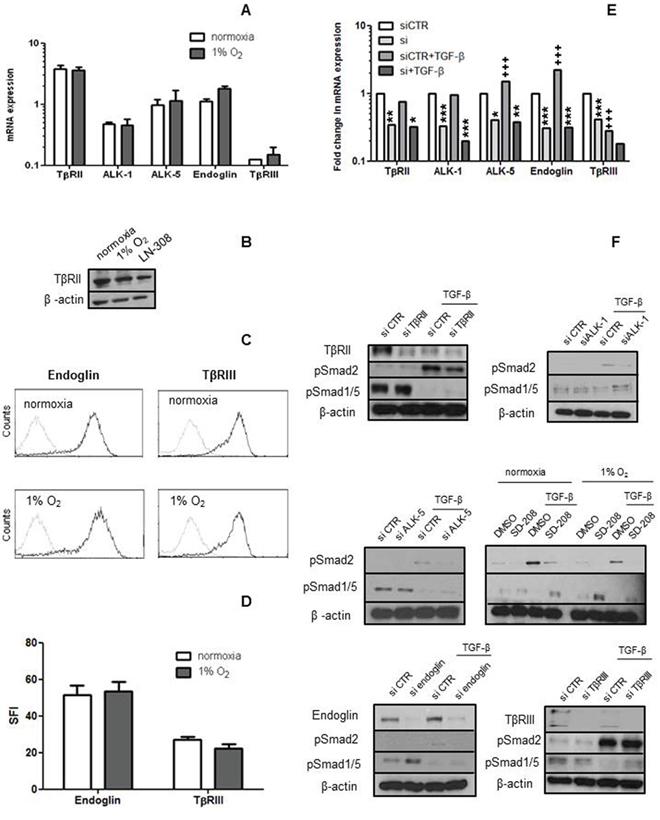 hCMEC express TGF-β receptors and coreceptors.