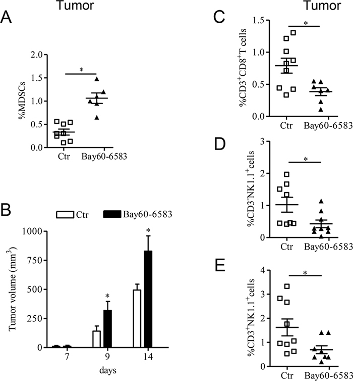 A2B receptor promotes tumor growth by altering the number of tumor-infiltrated immune cells.