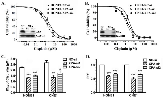 XPA contributes to cisplatin resistance in NPC cell lines.