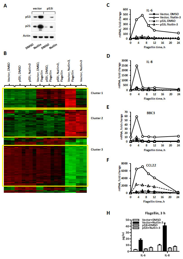 TLR5-mediated gene expression is greatly facilitated by p53 induction in MCF7 cells.