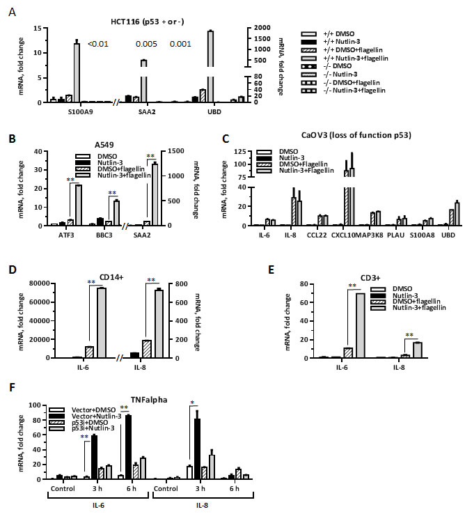 p53 enhances ligand-dependent expression of inflammation genes in several cell types.