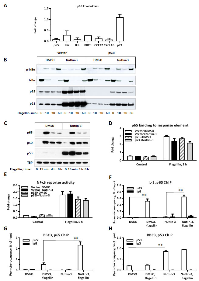 p65 is required for p53-enhancement of flagellin-induced gene expression.