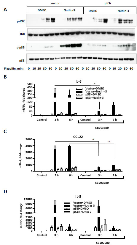 p53 activation specifically increases flagellin-induced phosphorylation of the p38 MAP kinase.