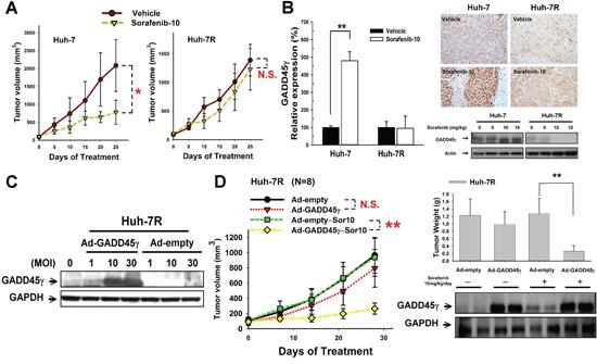 In vivo studies on the effects of GADD45γ induction on sorafenib efficacy.