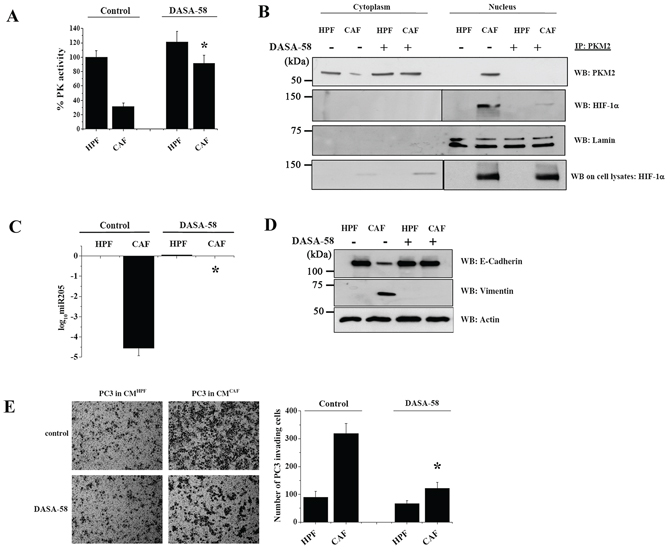 DASA-58 administration re-activates PKM2, impairs PKM2/HIF-1α nuclear association and abrogates EMT in PC3 cells.