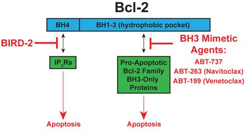 Targeting Bcl-2′s two anti-apoptotic mechanisms.