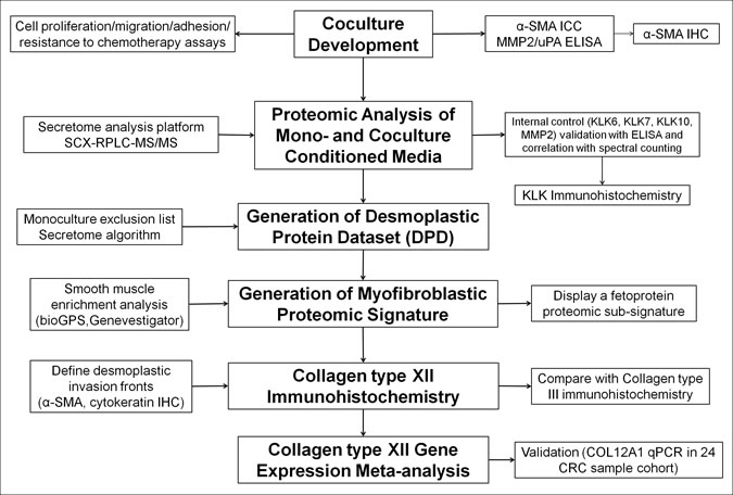 Experimental outline for identification, characterization and validation of desmoplastic proteomic signatures in CRC.