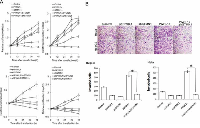 PIWIL1 can enhance cell proliferation and cell invasion via STMN1.