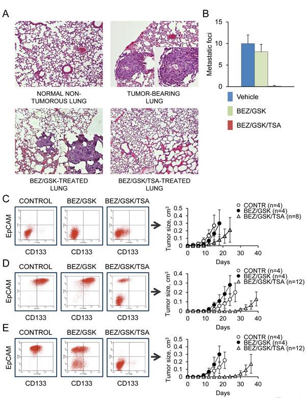 Combined MEK/PI3K/HDAC inhibition prevents lung metastasis