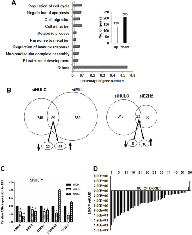 Regulation of genes by HULC and correlation with overexpressed genes in liver tumors.