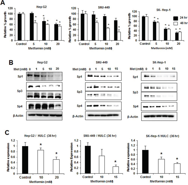 Metformin decreases growth, Sp proteins and HULC expression in HCC cells.
