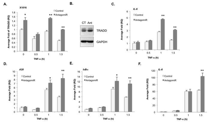 Loss of miR-31 enhances