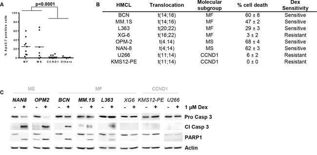 Dex sensitivity is heterogeneous and restricted to the MS and MF HMCL subgroups.