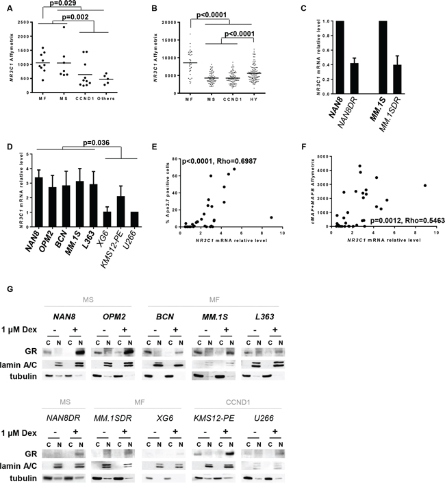 Analysis of both NR3C1 gene and GR protein expression in myeloma subgroups.