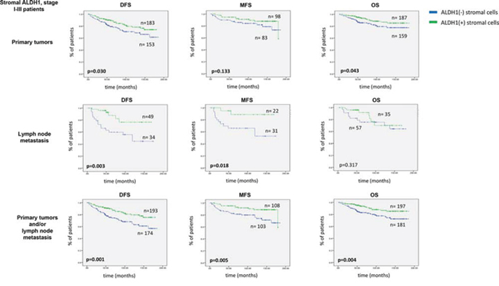 Impact of stromal ALDH1 expression on survival of stage I-III breast cancer patients.