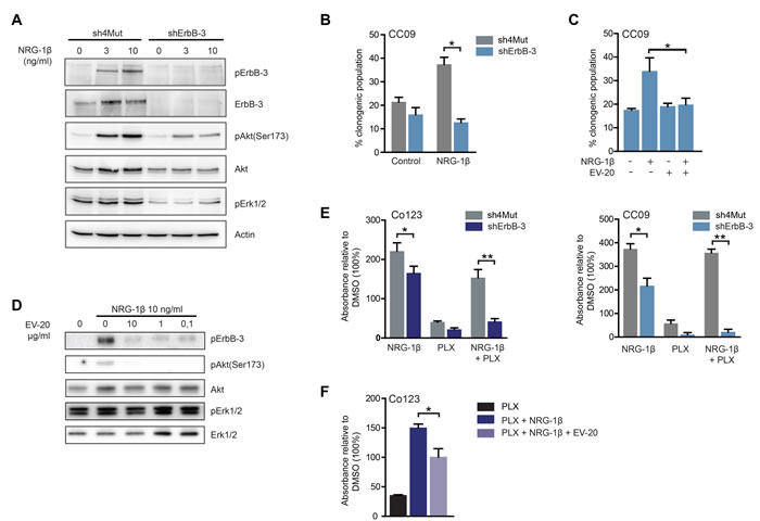 ErbB-3 is required for NRG-1