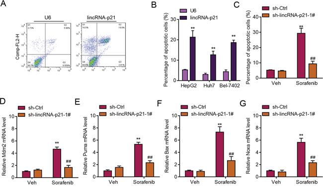 LincRNA-p21 regulates ER stress-related apoptosis.