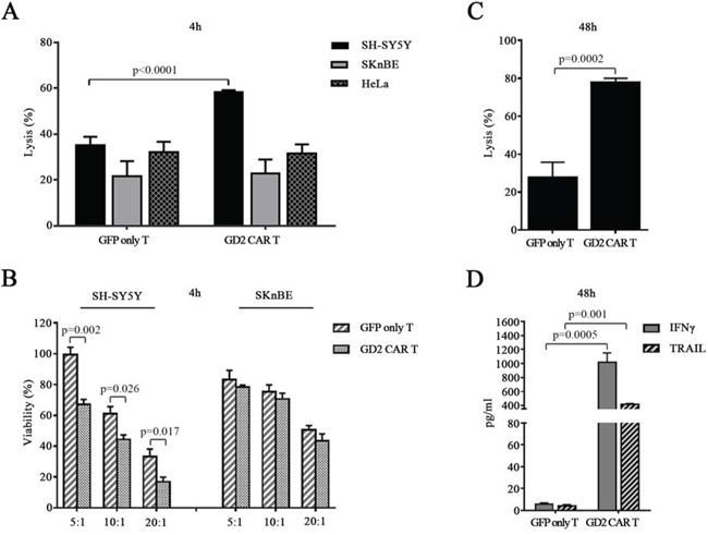 GD2 CAR T cells exert specific in vitro cytotoxicity.