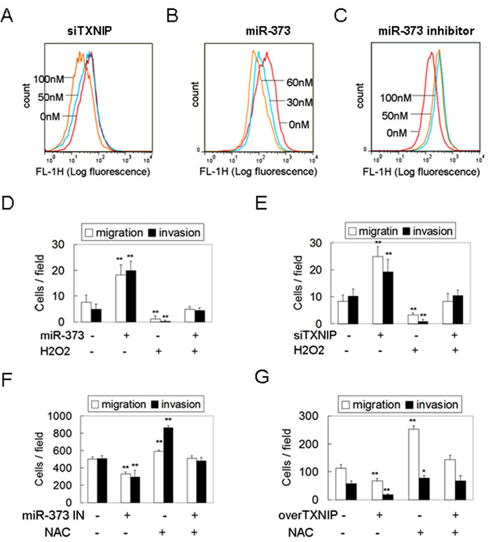 MiR-373 promotes migration and invasion via TXNIP-dependent ROS reduction.