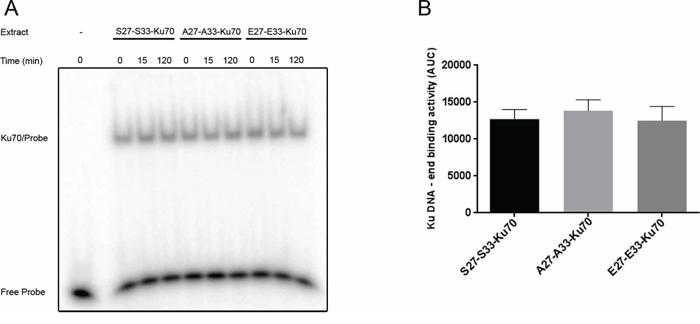 In vitro assay of Ku70/Ku80 heterodimer DNA-end binding activity.