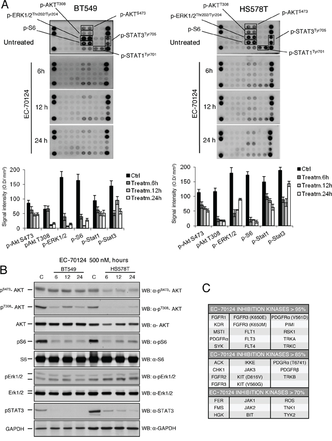 Effect of EC-70124 on signaling routes and kinase inhibitory profile.