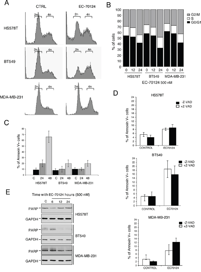 Cell cycle analyses and effect on apoptosis of EC-70124.