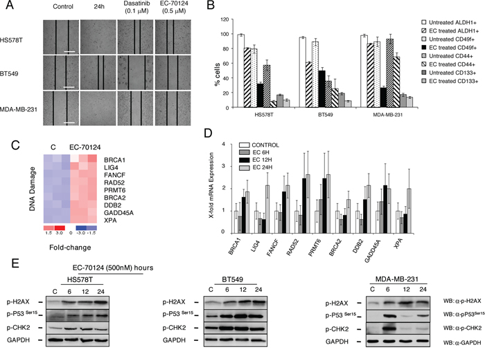 Effect of EC-70124 of migration, expression of stem-cell markers, and induction of DNA damage and activation of gene response.