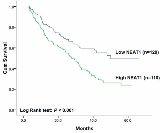 Correlation of NEAT1 expression with disease-free survival.