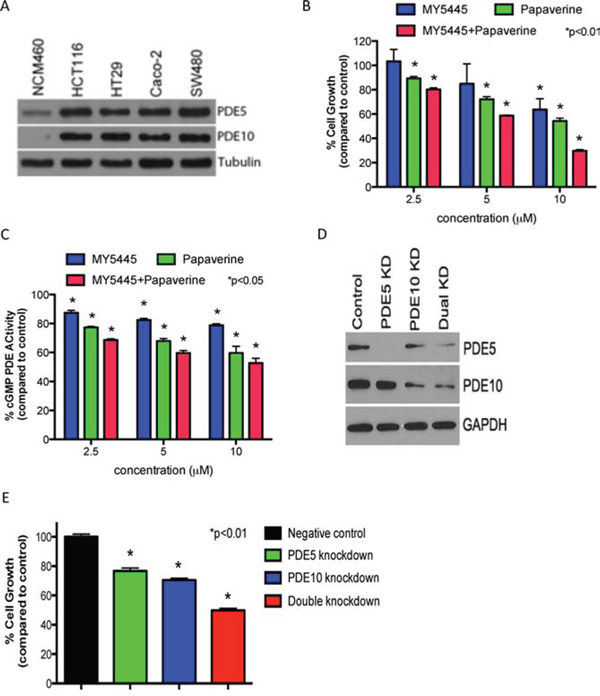 Dual inhibition of PDE5 and 10 results in greater inhibition of tumor cell growth than inhibiting either isozyme alone.