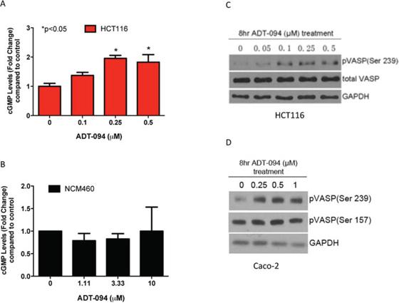ADT-094 activates cGMP/PKG signaling pathway in colon tumor cells.