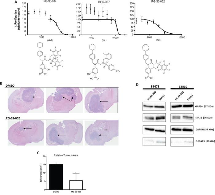 STAT3 inhibitors as candidate drugs for targeting tumor formation in brain metastases.