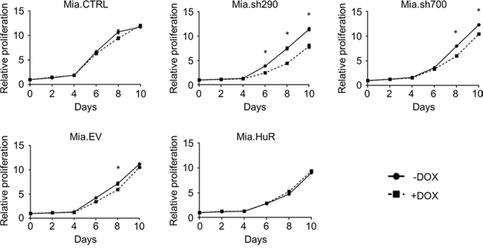 HuR is required for short-term proliferation of PDA cells.