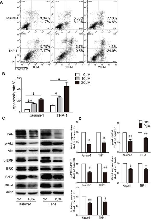 Effect of PARP-1 inhibition on apoptosis and molecular pathways in AML cell lines.