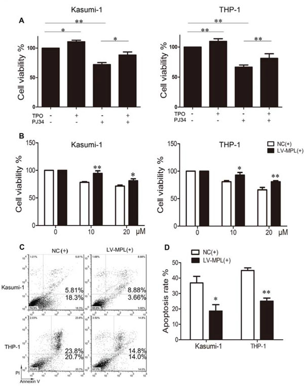 Enforced expression or activation of MPL partially rescues the effect of PARP-1 inhibition in AML cells.