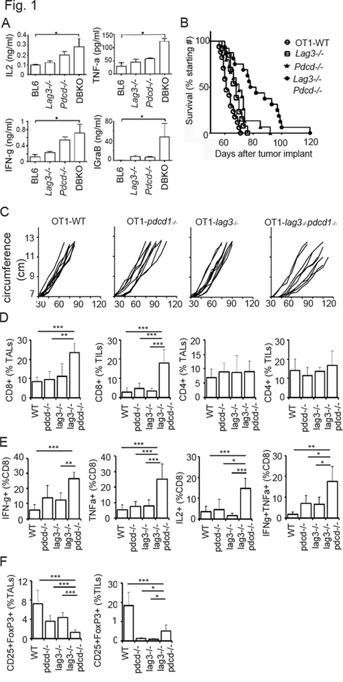 CD8+ T cells from Lag3−/−Pdcd1−/− knockout mice exhibit enhanced effector phenotype.