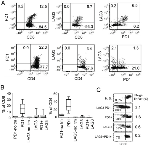 Co-expression of PD1 and LAG3 correlates with more severe dysfunction of CD8+ T cells.