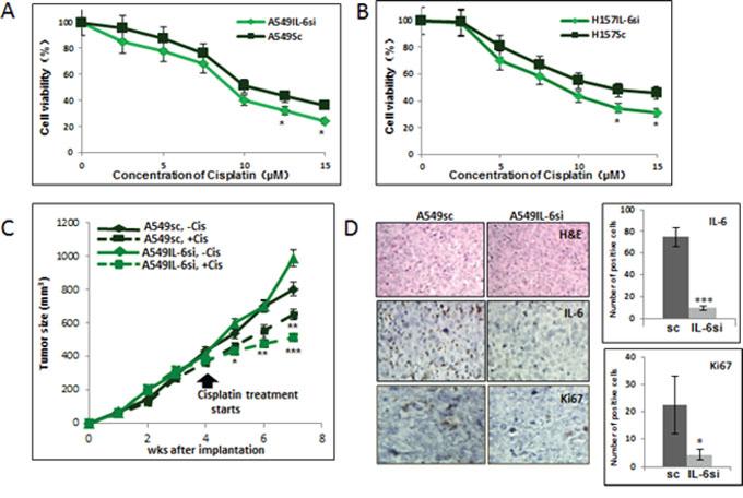 IL-6 knockdown in NSCLC cells increased in vitro and in vivo sensitivity to cisplatin.