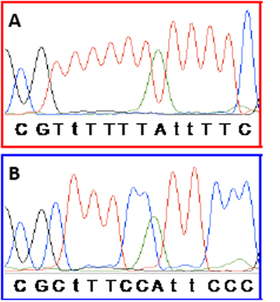 Sequencing confirms that right-shifting was due to incomplete conversion.
