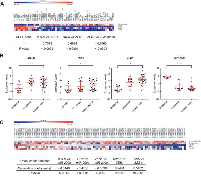 Expression correlation of MYLK, TKS5 and ZEB1 with miR-200c and/or E-cadherin in cancer cell lines and samples from breast cancer patients.
