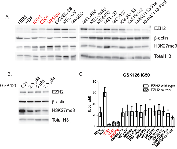 EZH2 and H3K27me3 are overexpressed in both mutant and WT melanoma cell lines but Y646 mutants are more sensitive to EZH2 inhibition.