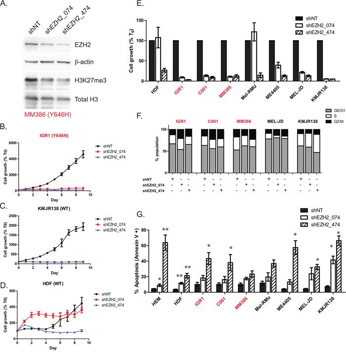 Knockdown of EZH2 phenocopies GSK126 mediated inhibition in melanoma.
