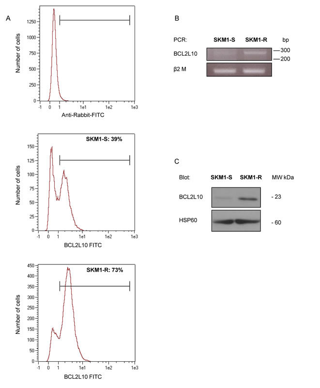 BCL2L10 protein expression in SKM1-S and SKM1-R cell lines.