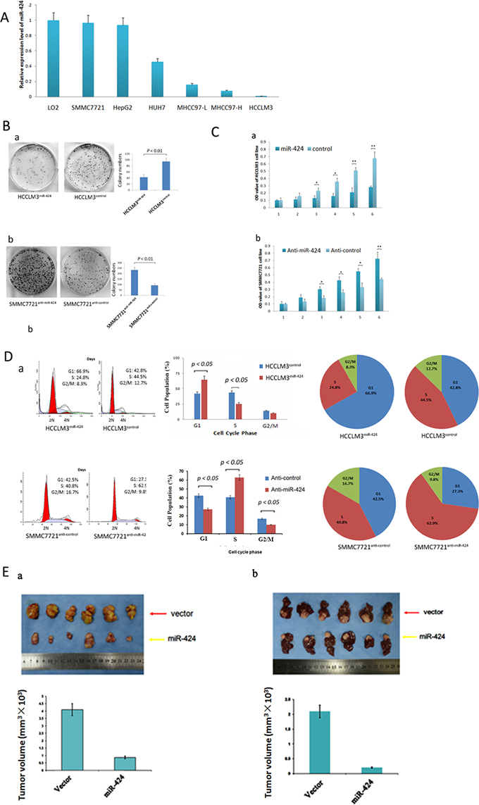 miR-424 inhibits HCC cell growth and colony formation in vitro and in vivo.