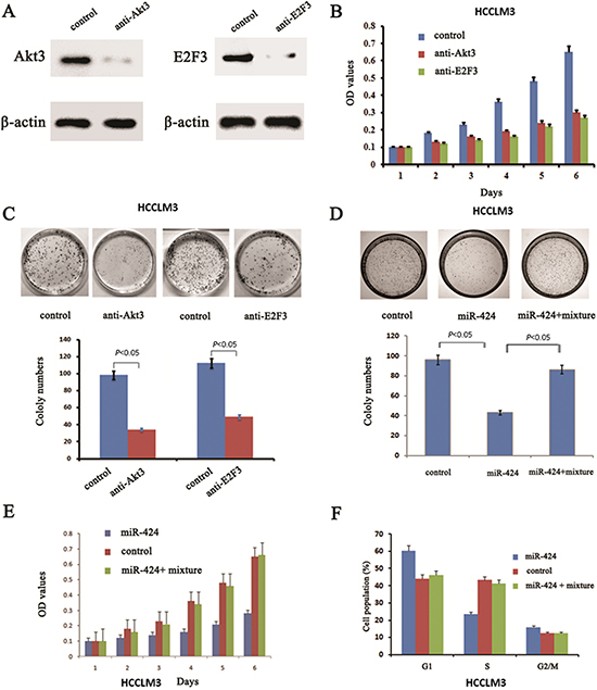 Blockage of Akt3 and E2F3 could mimic the effects of miR-424 expression in HCCLM3 cells and reintroduce both Akt3 and E2F3 into miR-424 transduced HCCLM3 cells abrogates the suppressive roles of miR-424 in HCC cell proliferation.