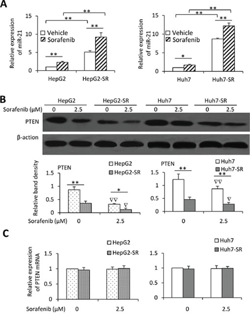 Exposure to sorafenib induces upregulation of miR-21 and downregulation of PTEN.