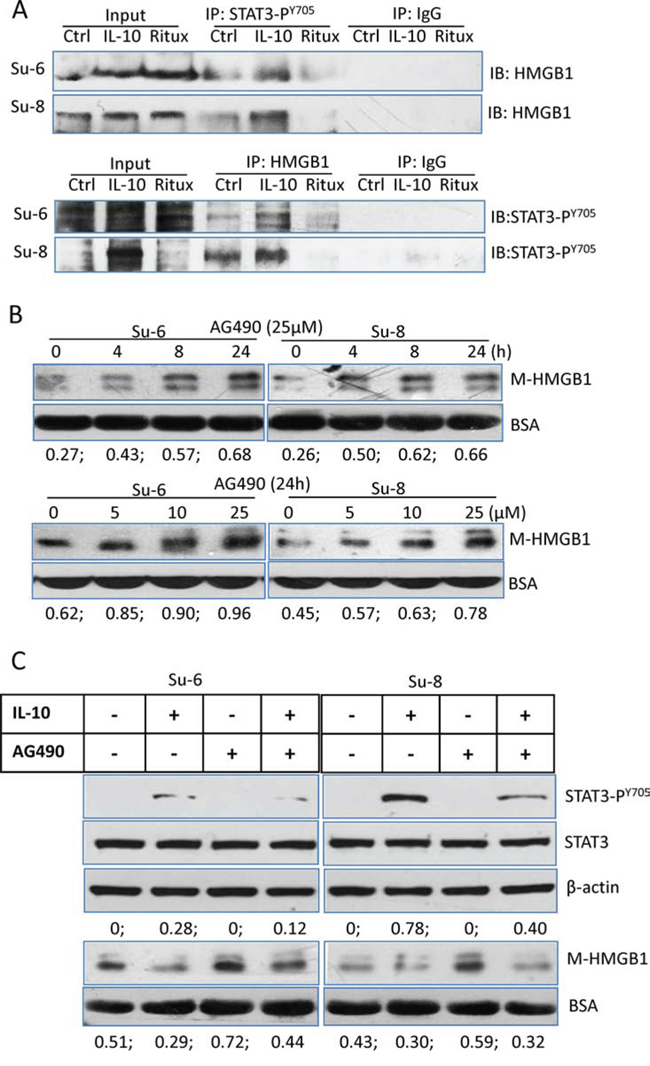 Association between STAT3 and HMGB1.